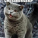 HAPPYCAT_I_CAN_HAS_CHEEZBURGER